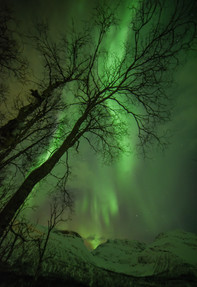 Northern Lights, a tree and snowy mountains.
