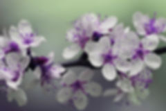 focus-basel-blossom.jpg