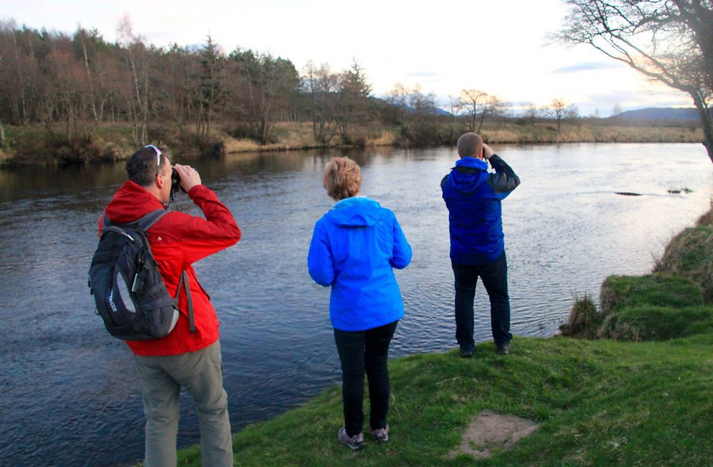 Looking for wildlife on the riverbank