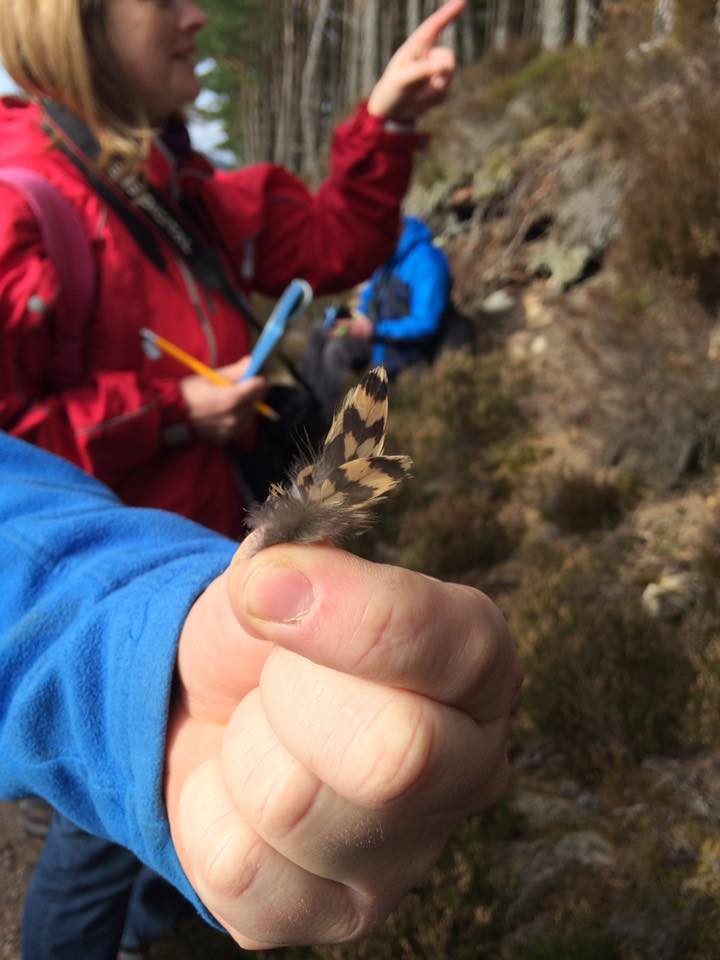 Students finding feathers to identify wildlife