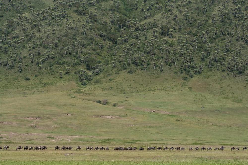 Wildebeest-Migration-Zul-Bhatia
