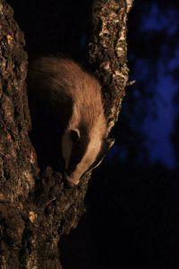 Badger (Richard Smith)