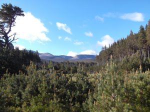 Caledonian Pine Forest (Keith White)