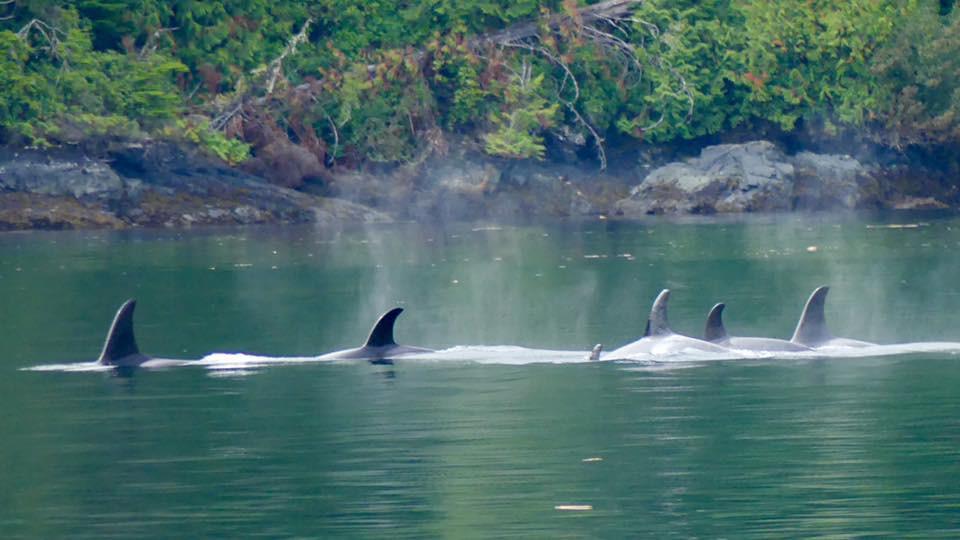 Orca, british columbia