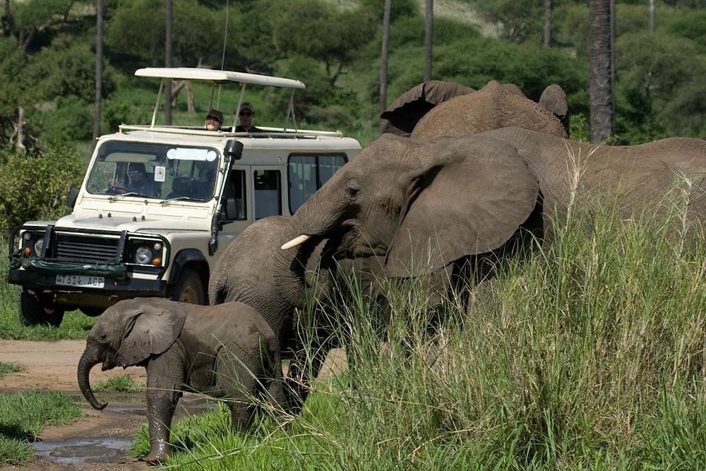 Elephant_Zul Bhatia