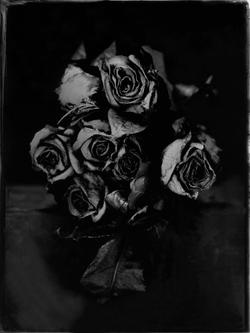 20180102_ROSES_II