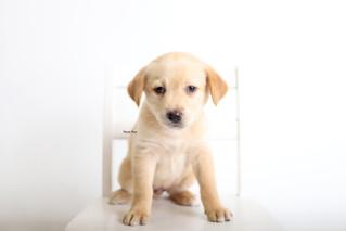 Pet Photos | Pups! | Manitowoc Family Photographer