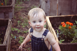 Cows and Gardens // Manitowoc Childrens Photographer