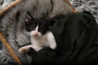Newborn Kitten Session! | Manitowoc Family Photographer