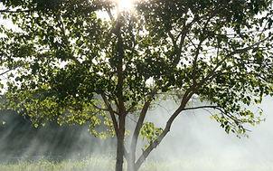ISO : Qualité et Environnement