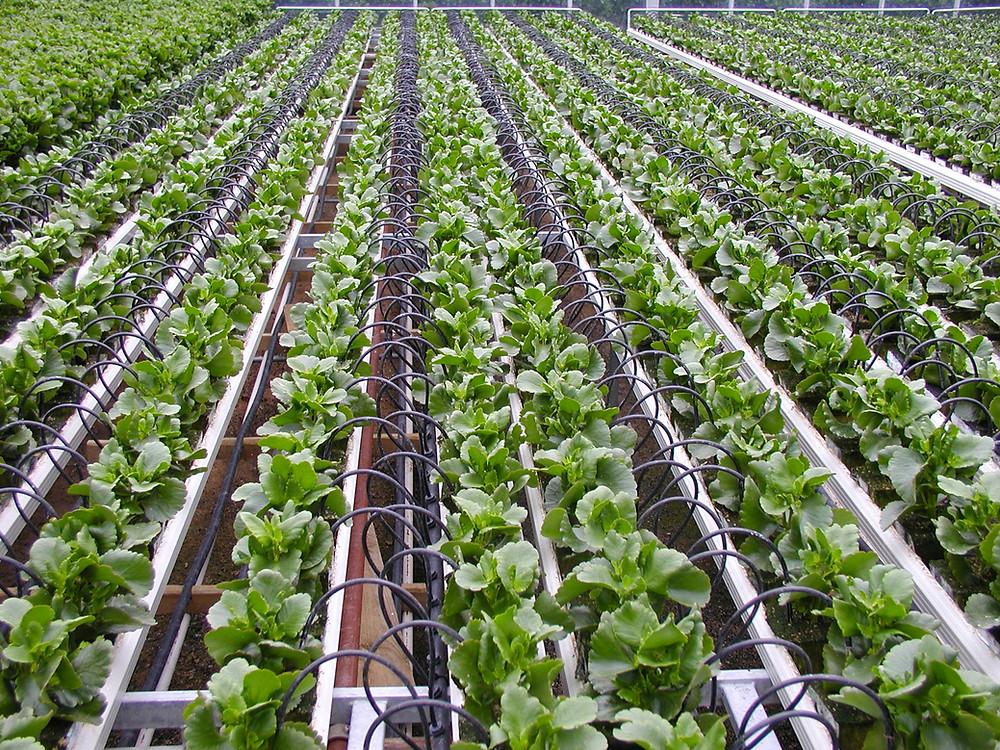 Israeli Drip Irrigation Technology