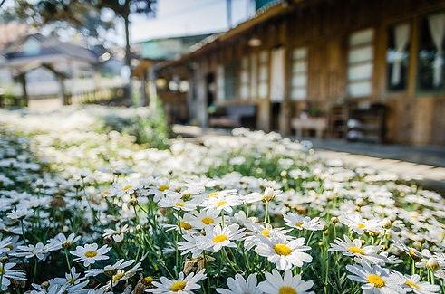 mantenimiento de jardines en Mallorca.jp