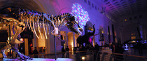 THE-FIELD-MUSEUM-CHICAGO---All-Need-Love