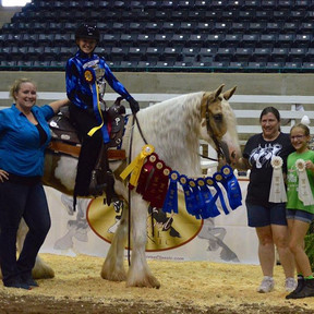 Feathered Horse Classic SC