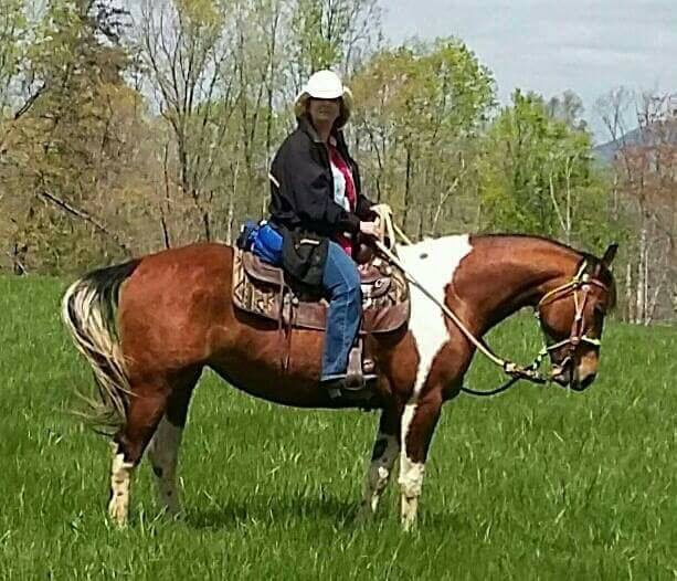 Horse for Sale / Lease