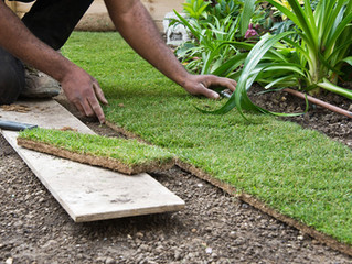 Sod vs. Seed: Which is Best for Your Lawn