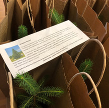 Arbor Day trees for 4th Grade