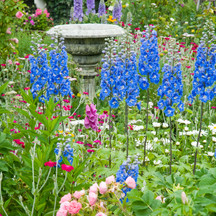 Perennial Garden with delphinium