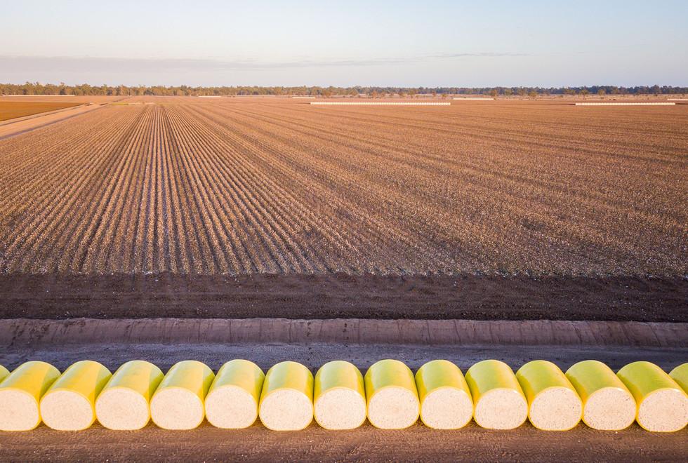 Cotton Picking (4 of 13).jpg