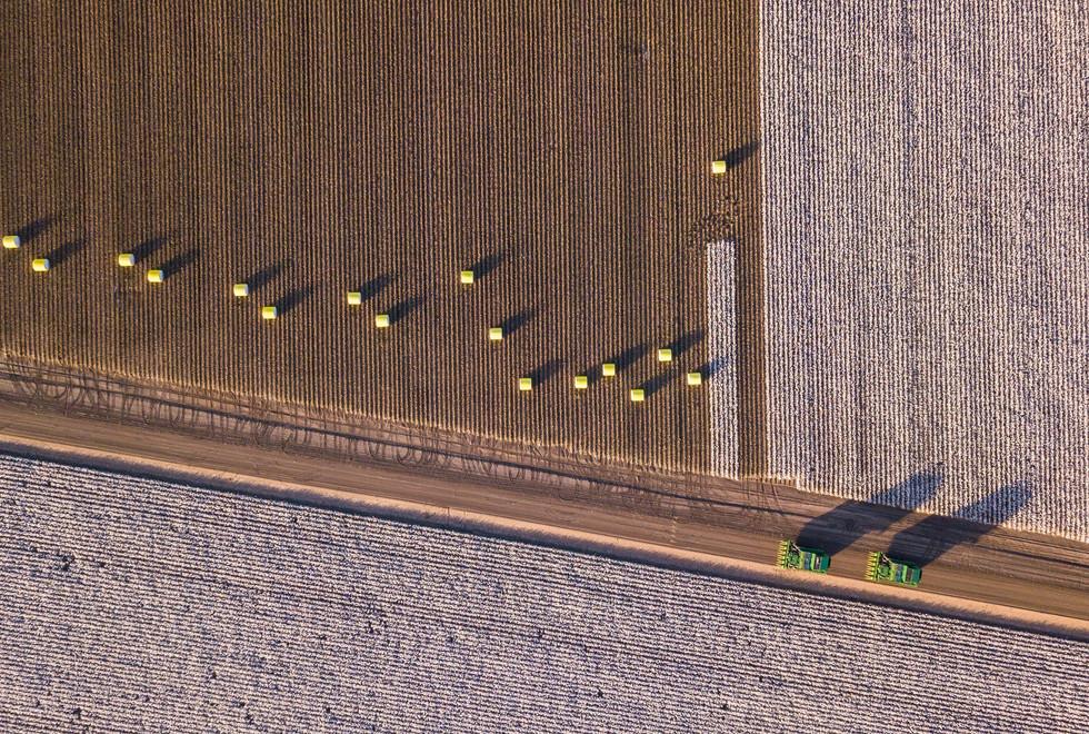 Cotton Picking (7 of 13).jpg