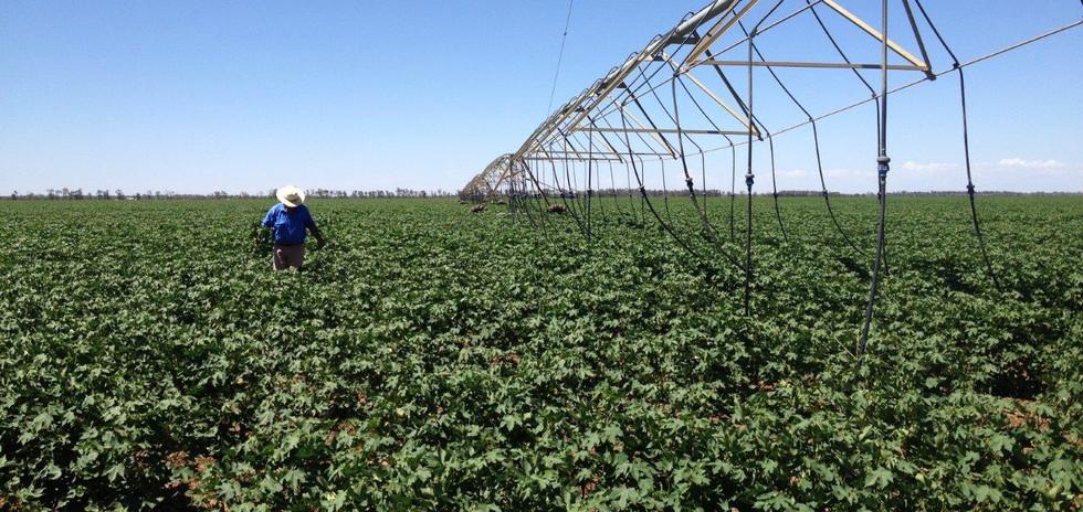 Cotton pivot Jan 2014 039.jpg