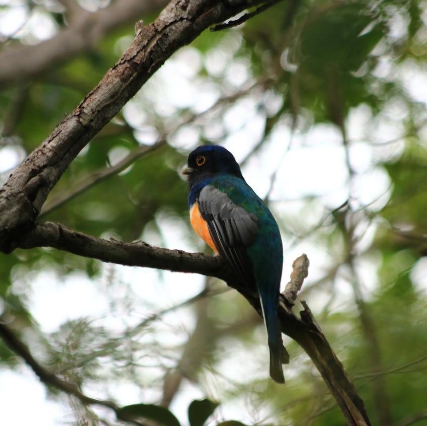 Mini Pantanal Marimbus
