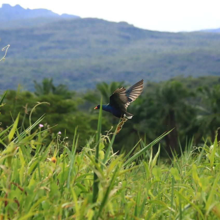 Mini Pantanal Chapada Diamantina