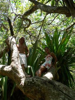 Brasilien Adventure Bromelia