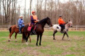 horse pic_edited.jpg