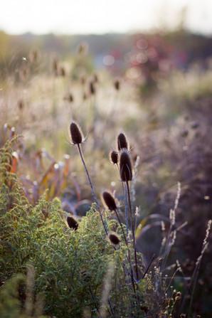 Nicolle-James-Nature-10.jpg