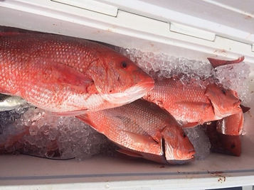 Red Snapper Fishing in Pensacola Florida