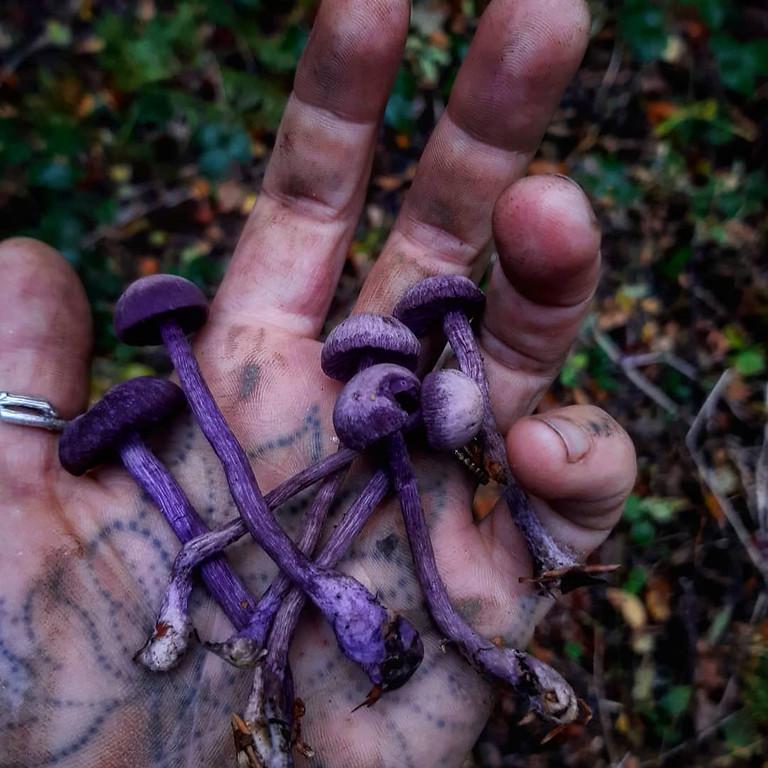 Autumn foraging course