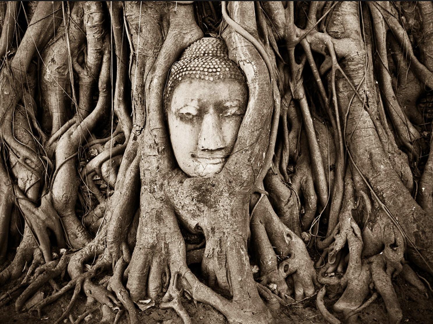 Thailand Atuntthaya Buddha Tree