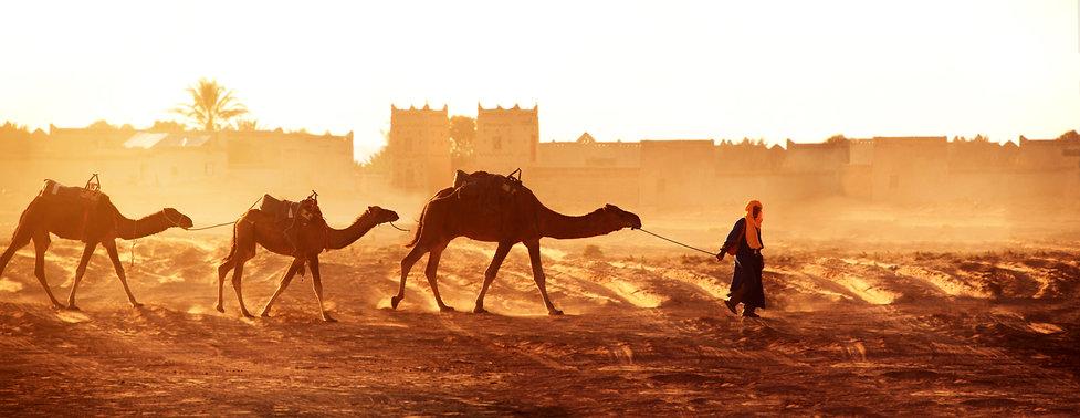 Camels with leader.jpeg