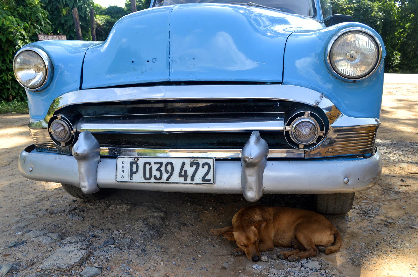 Sleeping Dog in Vinales