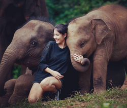 Elephant Sanctuary 2