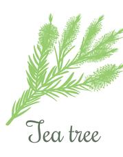 Tea Tree.png