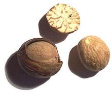 Nutmeg.jpg