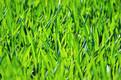 grass-165064_640.jpg
