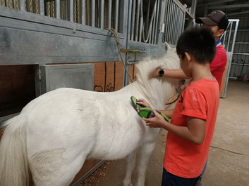 馬匹輔助教育生態體驗活動-親子活動日