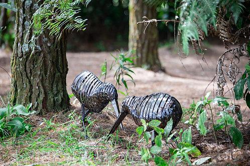 Kiwi Bird - Circles
