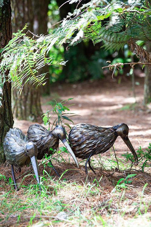 Kiwi Bird - Feathered