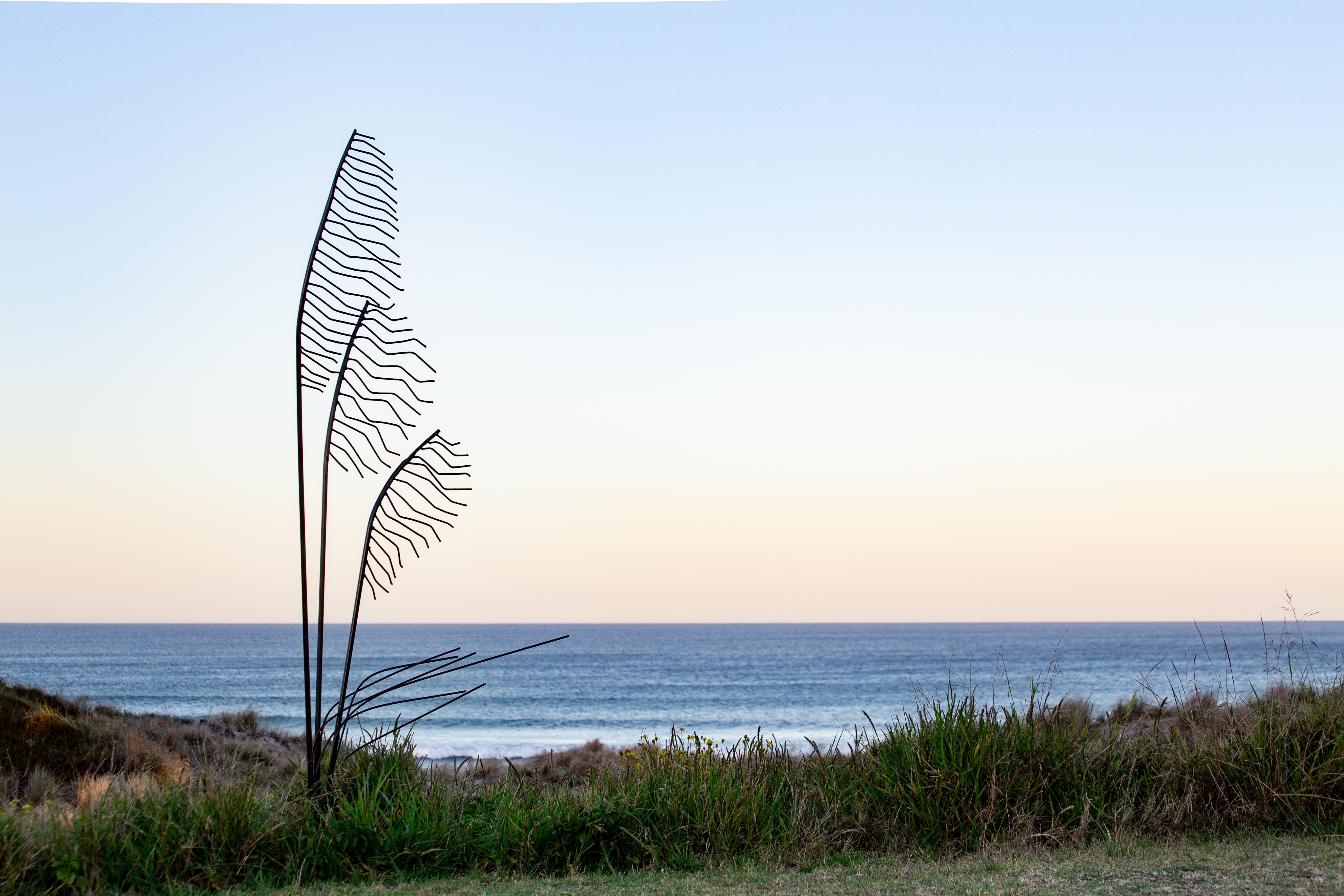 NZ Toetoe Grass