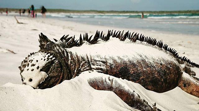 Nada como una buena siesta en una playa