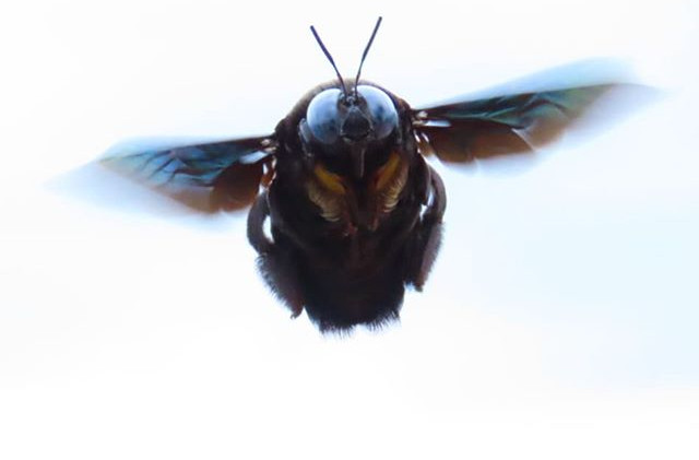 Un bumble Bee