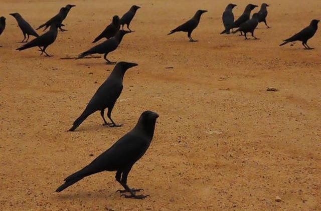 Un encuentro de House crows.