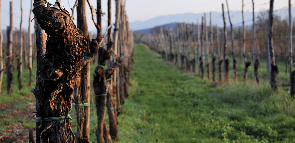 Vinograd Vineyard