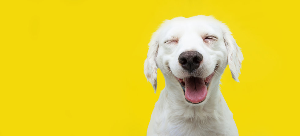 Happy puppy dog smiling on isolated yell