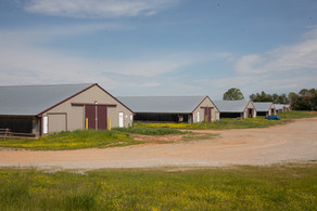 Ask the Experts: What's My Poultry Farm Worth?