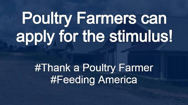 PoultryFarmStimulusApply.jpg